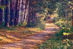 Trilha da floresta Imagem de Stock Royalty Free
