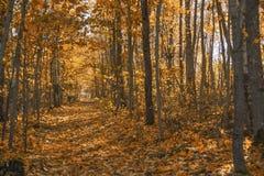 Trilha da fuga do outono Fotos de Stock Royalty Free