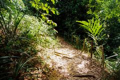 Trilha da selva fotos de stock
