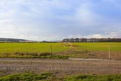 Trilha de exploração agrícola com trigo Imagem de Stock Royalty Free