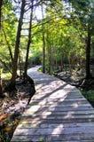 Trilha de madeira através de um bosque Fotografia de Stock Royalty Free