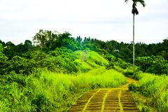 Trilha de passeio da plantação verde luxúria na selva tropical da floresta tropical imagem de stock
