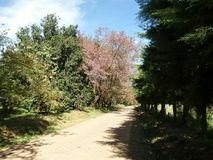 Trilha de passeio empoeirada através da floresta Foto de Stock