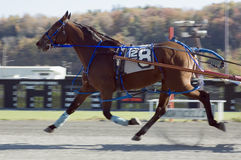 Trilha de raça 1 Fotografia de Stock