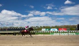 Trilha de raça de Belmont Park Imagem de Stock Royalty Free