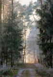 Trilha de sujeira através de uma floresta com árvores geadas Fotografia de Stock Royalty Free