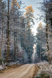 Trilha de sujeira através de uma floresta com árvores geadas Fotografia de Stock