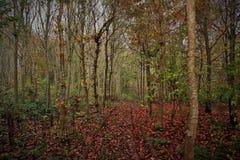 Trilha de veículo através da floresta Foto de Stock