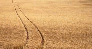 Trilha do campo de trigo Foto de Stock