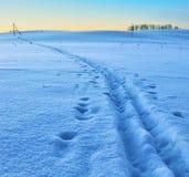 Trilha do esqui em um campo de neve Fotografia de Stock