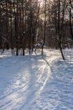 Trilha do esqui na floresta do inverno Fotos de Stock