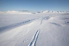 Trilha do esqui na geleira ártica Fotografia de Stock