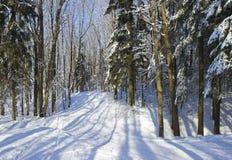 Trilha do esqui na madeira do inverno. Fotos de Stock Royalty Free