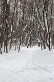 Trilha do esqui na madeira do inverno Foto de Stock Royalty Free