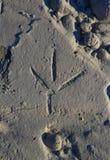 Trilha do pássaro na areia Imagem de Stock Royalty Free