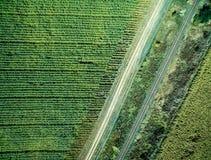 Trilha e estrada de ferro paralela no campo do país Imagens de Stock Royalty Free