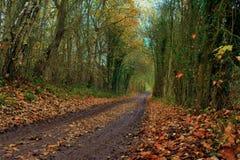 Trilha enlameada através da floresta Imagem de Stock Royalty Free