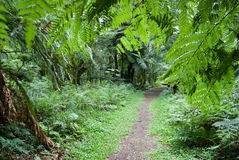 Trilha na floresta Fotos de Stock Royalty Free
