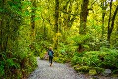 Trilha na queda da falha, parque nacional de Fiordland, Milford Sound, Nova Zelândia Fotos de Stock Royalty Free