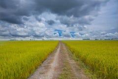 Trilha Off-road no país Fotos de Stock Royalty Free