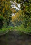 Trilha Railway fotos de stock