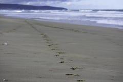 Trilhas animais do cão do companheiro na areia da praia imagens de stock royalty free