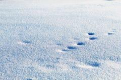 Trilhas animais na neve imagens de stock royalty free