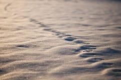 Trilhas animais na neve, fundo natural Imagens de Stock Royalty Free