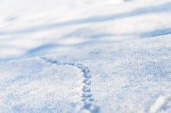 Trilhas animais na neve recentemente caída no dia de ano novo Foto de Stock