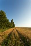 Trilhas através do campo de trigo Imagem de Stock