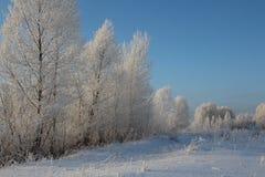 Trilhas cobertos de neve do esqui do vidoeiro da geada da neve das estradas das árvores da neve da floresta do inverno do russo n fotografia de stock