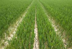 Trilhas da colheita Foto de Stock Royalty Free