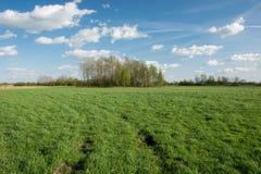 Trilhas da roda em um prado e em um bosque verdes, nuvens brancas no c?u azul imagens de stock