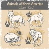 Trilhas do animal de America do Norte e as animais, pegadas Imagens de Stock Royalty Free