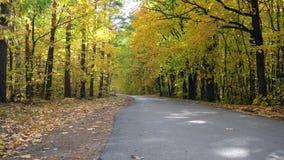 Trilhas do outono no parque com folhas amarelas video estoque