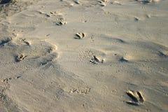 Trilhas do pássaro na areia foto de stock royalty free