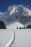 Trilhas do Snowshoe nas Montanhas Rochosas canadenses Imagens de Stock Royalty Free
