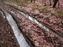 Trilhas enlameadas do pneu do whith da estrada de floresta do país Fotografia de Stock Royalty Free