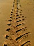 Trilhas na areia Foto de Stock