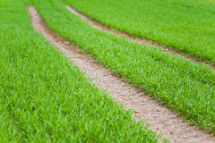 Trilhas na colheita Imagens de Stock