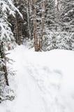 Trilhas na fuga snowshoeing em um parque nacional em Canadá imagens de stock