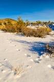 Trilhas na neve Fotografia de Stock