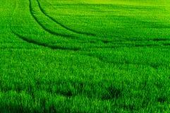 Trilhas no campo de exploração agrícola Fotografia de Stock