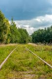 Trilhas railway velhas na floresta imagem de stock