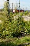 Trilhos cobertos de vegetação 1 do trem Fotografia de Stock