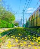 Trilhos florescidos Foto de Stock Royalty Free