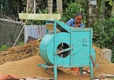 Trilladora del arroz en el valle de Harau en Sumatra del oeste, Indonesia foto de archivo