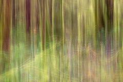 Trillend, abstract beeld van BC regenwoud Royalty-vrije Stock Foto's