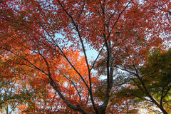 Trillend bos op zonnige dag Royalty-vrije Stock Fotografie