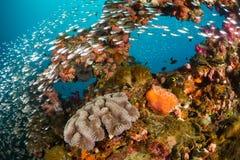 Trillend koraalrif bij de Yongala-Schipbreuk stock foto